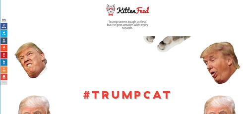 Trumpcat 1